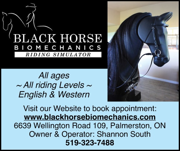 Black HOrse Biomechanics riding Simulator