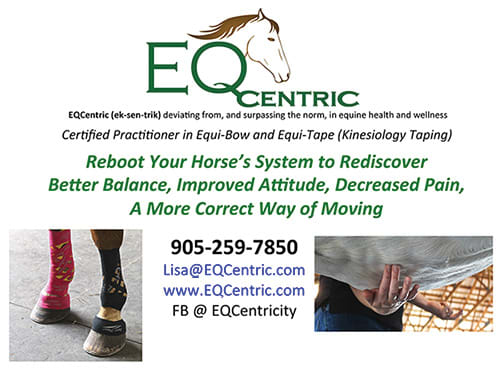 Equine Natural Therapy