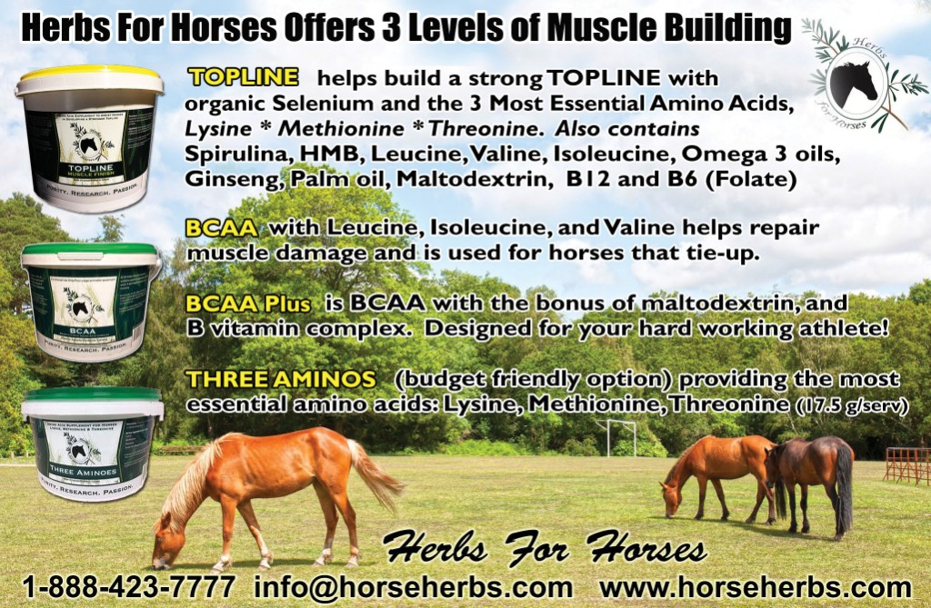 Herbs for Horses products