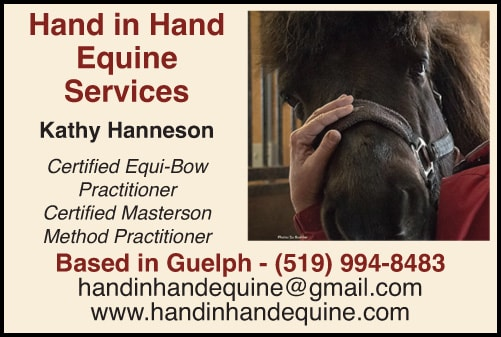 Hand in Hand Equine Services