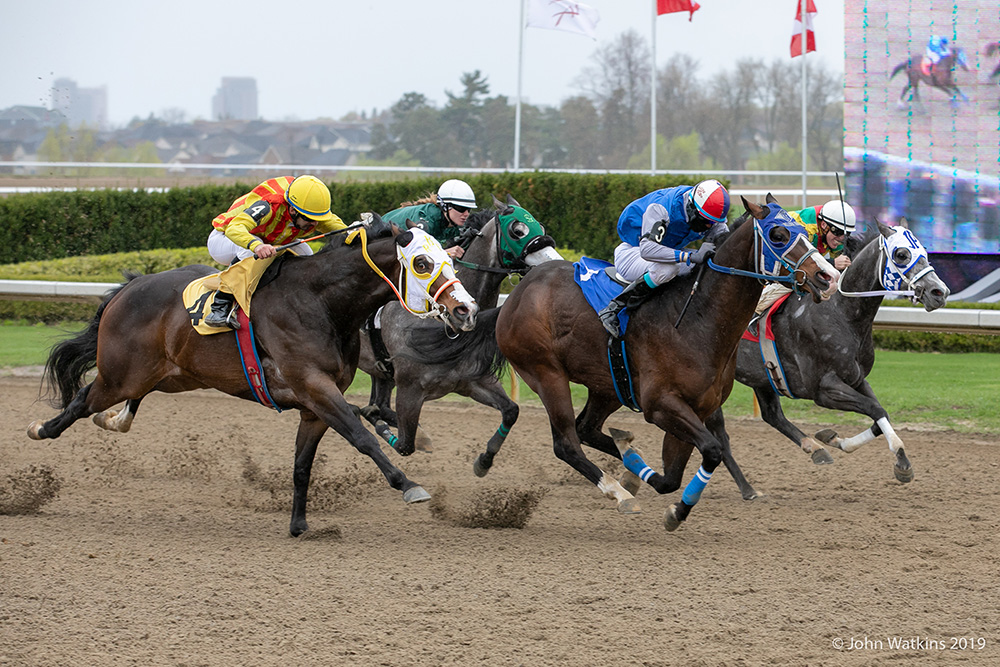 Ajax Downs Live Racing