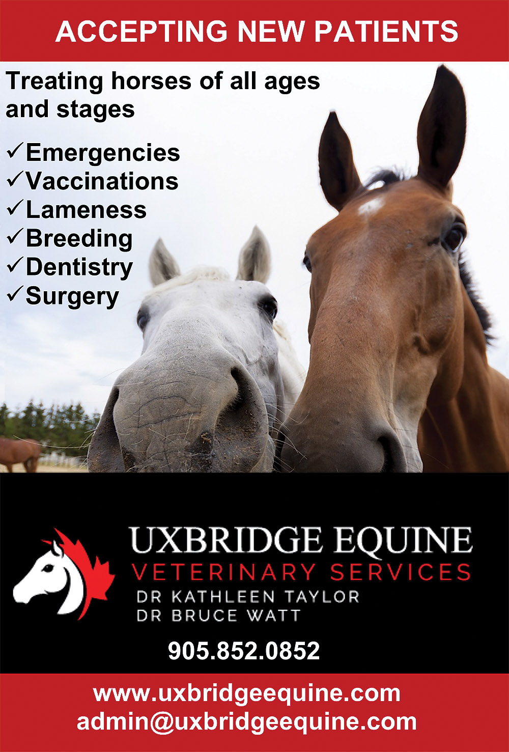 Uxbridge Equine Veterinary Services
