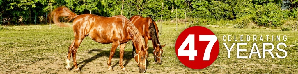 horses grazing with celebrating 47 years banner