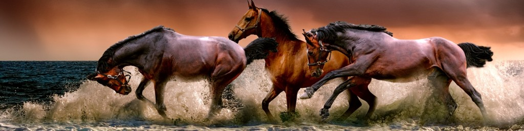 horses frolicking in water - The Rider Contact Page