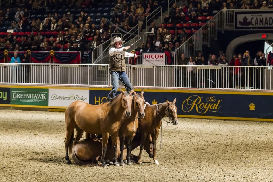 Australia's Guy Mclean natural horsemanship