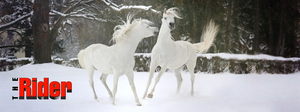 two arab horses playing in the snow