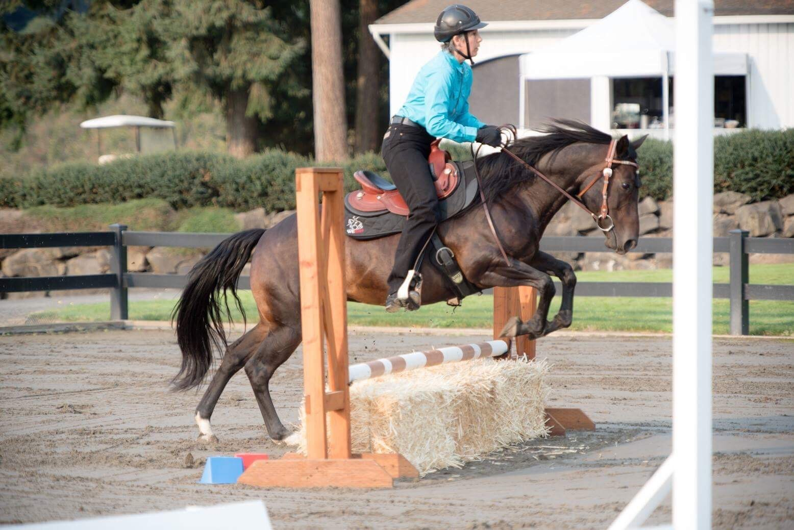 working equitation western